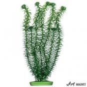 Plante Acvariu Hagen Marina Anacharis 20cm