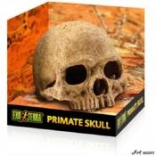 Decor Exo Terra Primate Skull