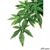 Plante Terariu Abutilon S