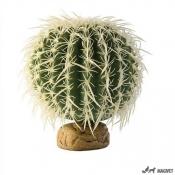 Plante Terariu Barrel Cactus M