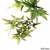 Plante Terariu Croton Mare
