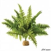 Plante Terariu Boston Fern Small