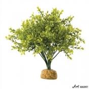 Plante Terariu Boxwood