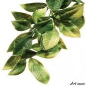 Plante Terariu Mandarin