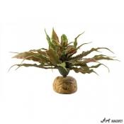 Plante Terariu Star Cactus