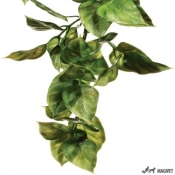Plante Terariu Ampallo Mare